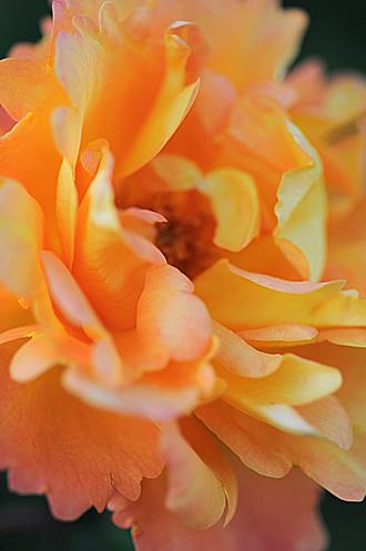 DSC_0083-s_20111029195133.jpg