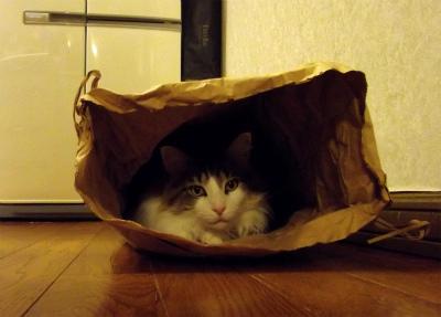 my(米)寝袋です
