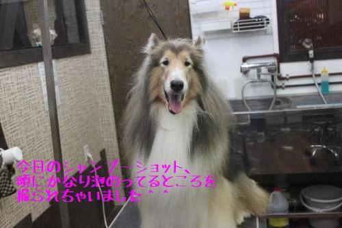 2014-9-30kentakuya_convert_20141005185733.jpg