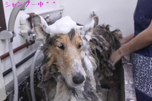 2014-9-30縺阪l縺・↓縺励※縺ュ_convert_20141005185612