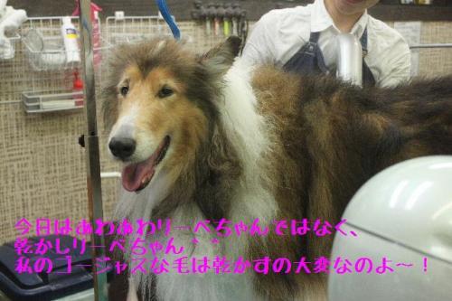 2014-11-12繝ェ繝シ繝吶す繝」繝ウ繝励・縺昴・・農convert_20141119225558