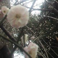 haru2_20130215000958.jpg