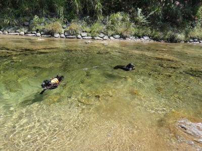 シュシュくんと川遊び