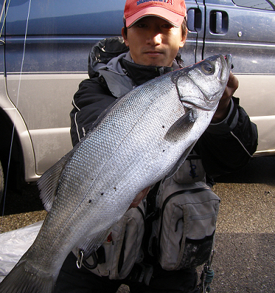 鯉20121231釣り納めヒラ