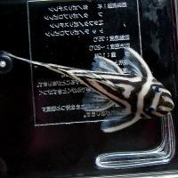 インペ01