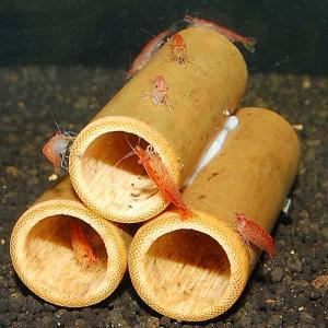 チェリー竹管