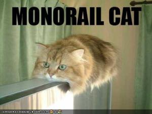 funny-pictures-monorail-cat1.jpg