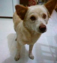 adopt 150213
