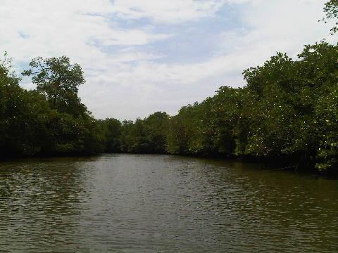 mangrove170413