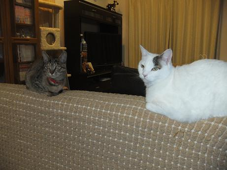 ルビーとラム ソファーの上で