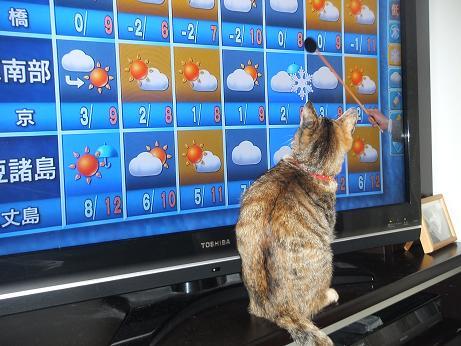 天気予報を見るルビー5