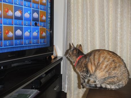 天気予報を見るルビー4