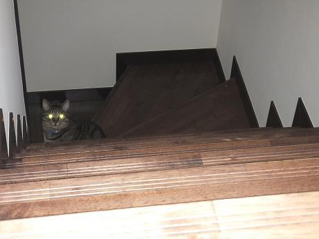 ちっちゃいレモン 階段下から