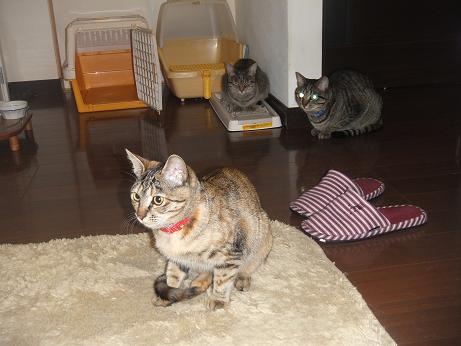 保護猫たち1