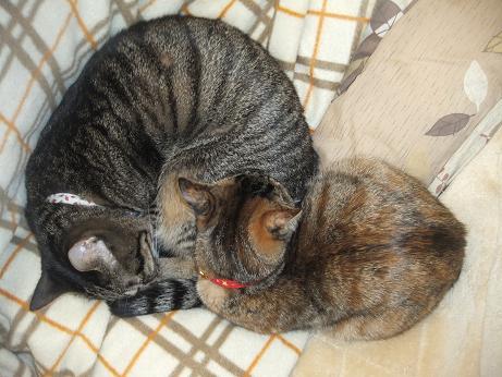 ルビーとレモン一緒に寝る1