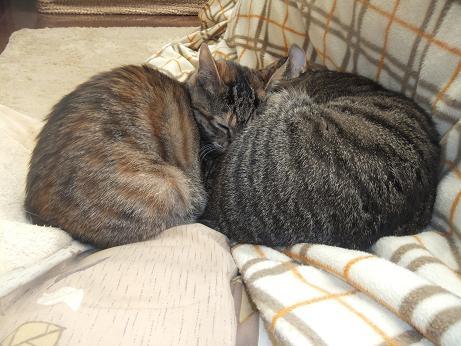 ルビーとレモン一緒に寝る2