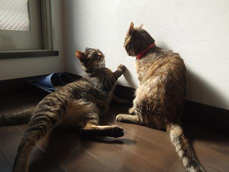 ルビーとレモンの日向ぼっこ2