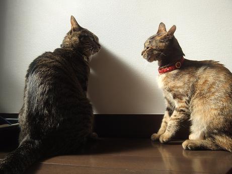 ルビーとレモンの日向ぼっこ11