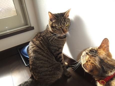 ルビーとレモンの日向ぼっこ12