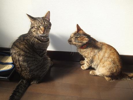 ルビーとレモンの日向ぼっこ13