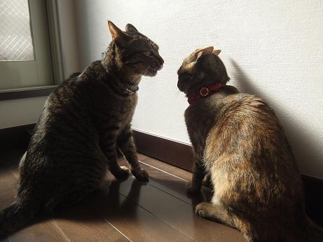 ルビーとレモンの日向ぼっこ6