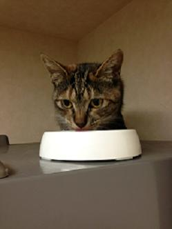 るりちゃん 冷蔵庫の上で食事中
