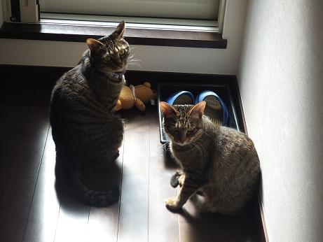 レモンとマロン3