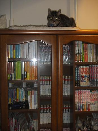 どこかに猫が2