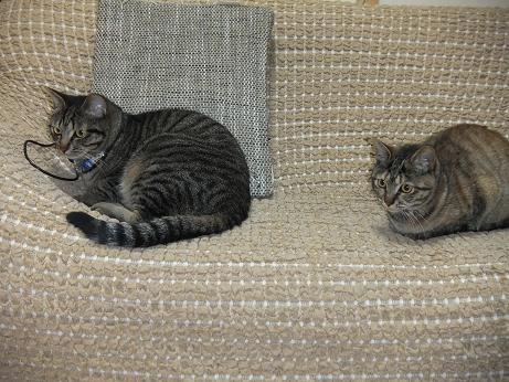 レモンとルビー ソファーで様子をうかがう3