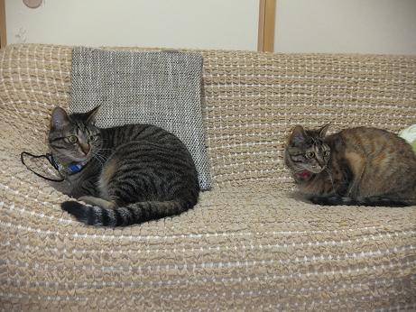 レモンとルビー ソファーで様子をうかがう2