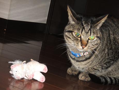 豚は豚でもぬいぐるみ