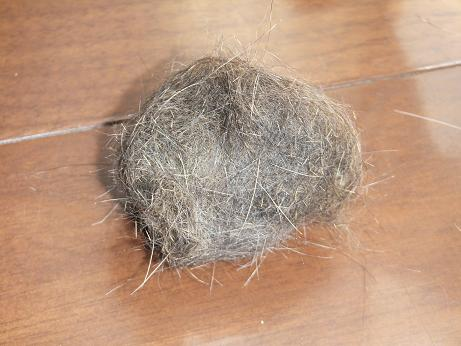 マロンの毛玉