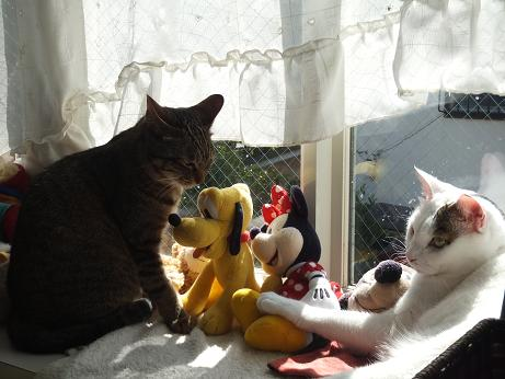 出窓で ラムとマロン2