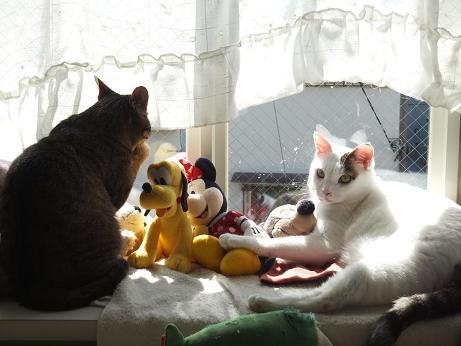 出窓で ラムとマロン1