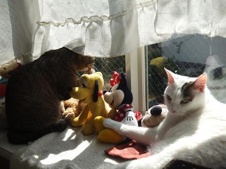 出窓で ラムとマロン3
