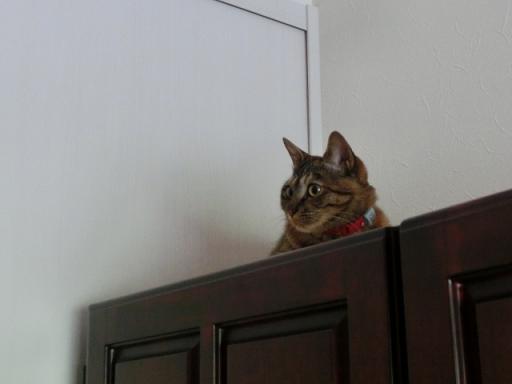 ルビー たんすの上で