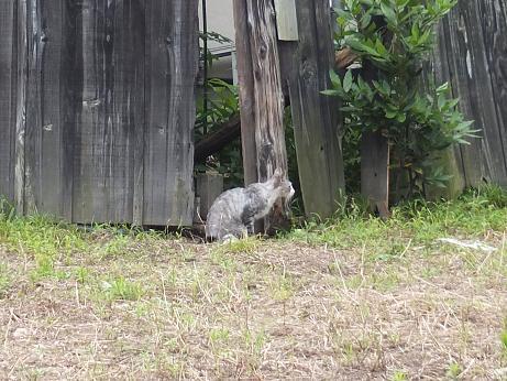 散歩中に見つけた猫1