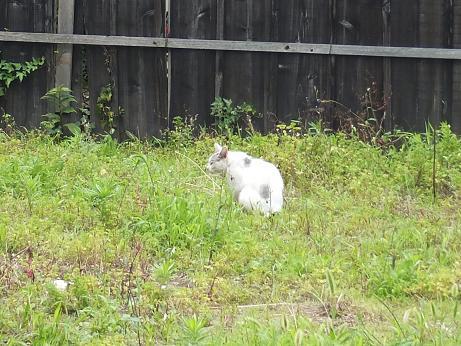 散歩中に見つけた猫