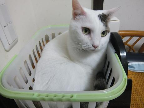 洗面所のお気に入り籠1