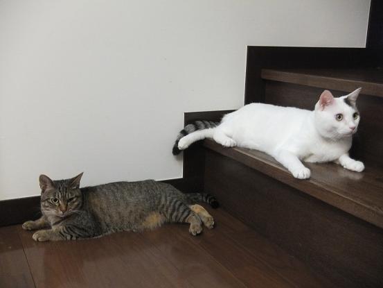階段で避暑2