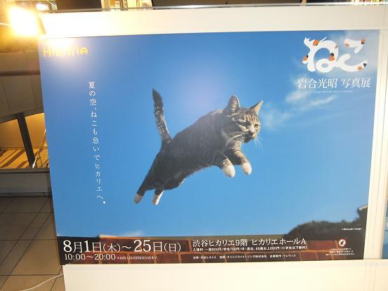 岩合さんの写真展ポスター
