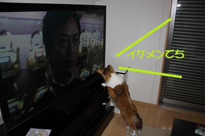 テレビとルナ