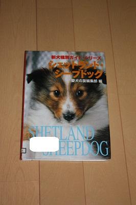 シェットランドシープドックの本