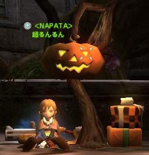 かぼちゃの木の下で。