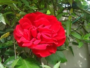 504花④