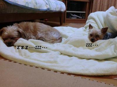 俺様トム君が寝ていると平和なんですが・・・