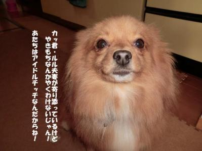 アイドル犬・笑う犬チッチでおます