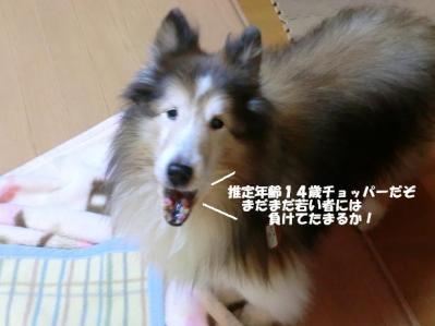 ミミたん里親様の先住犬ちゃん