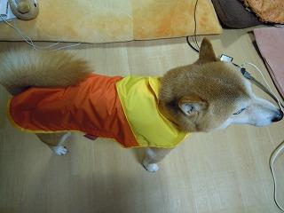 オレンジカッパ