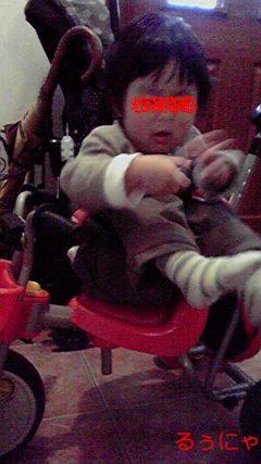 三輪車にハマルこーたん